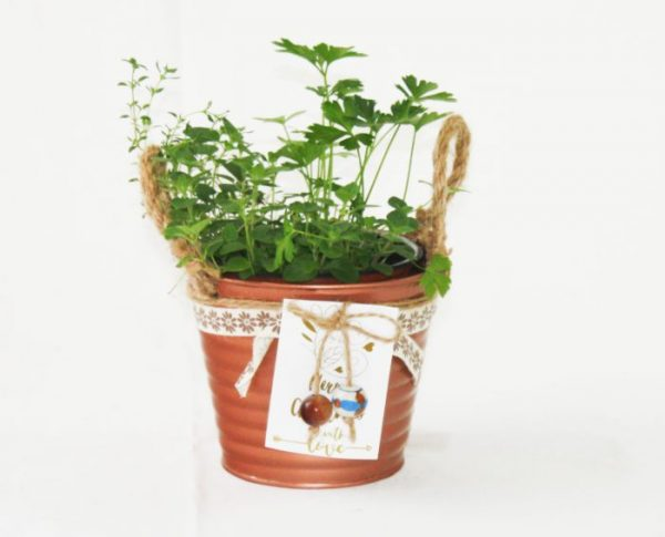 Herb In Copper Pot